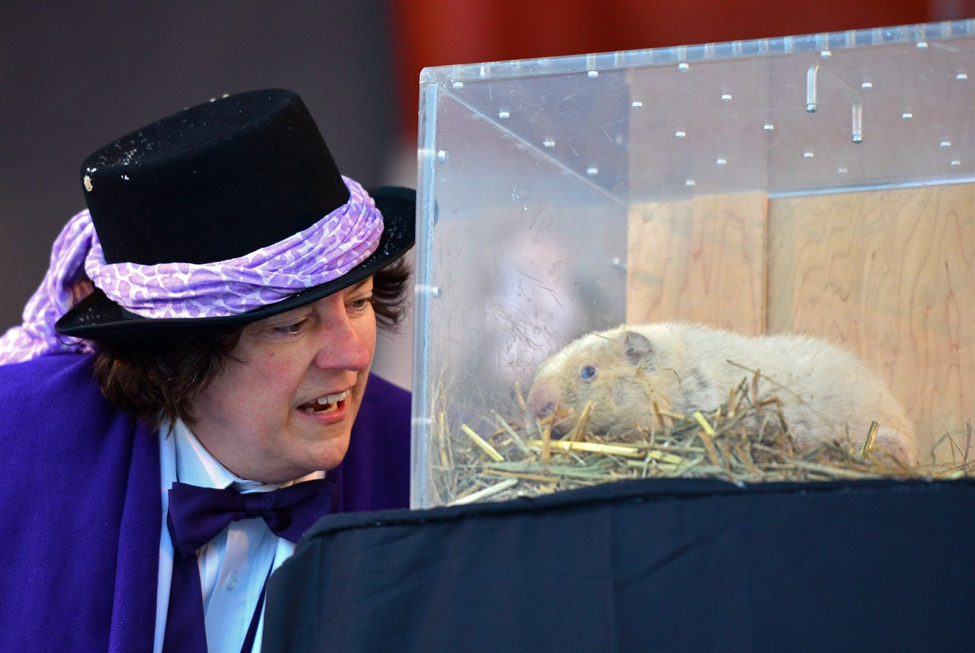 Forecasting groundhog Wiarton Willie dies at 13