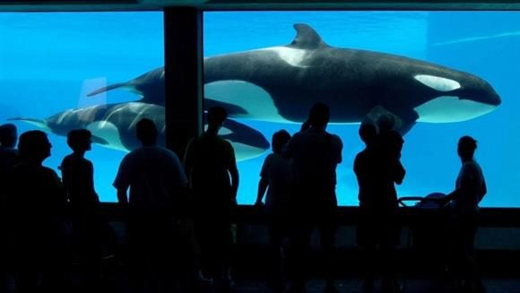 Marineland cleared of all charges by OSPCA