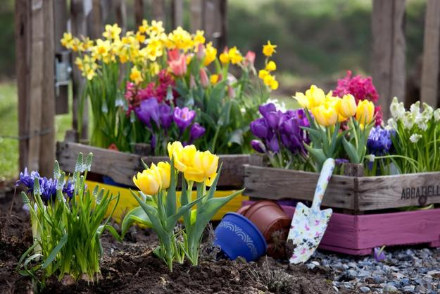 Mild weather means a jumpstart to the gardening season 570 news mild weather means a jumpstart to the gardening season mightylinksfo Images