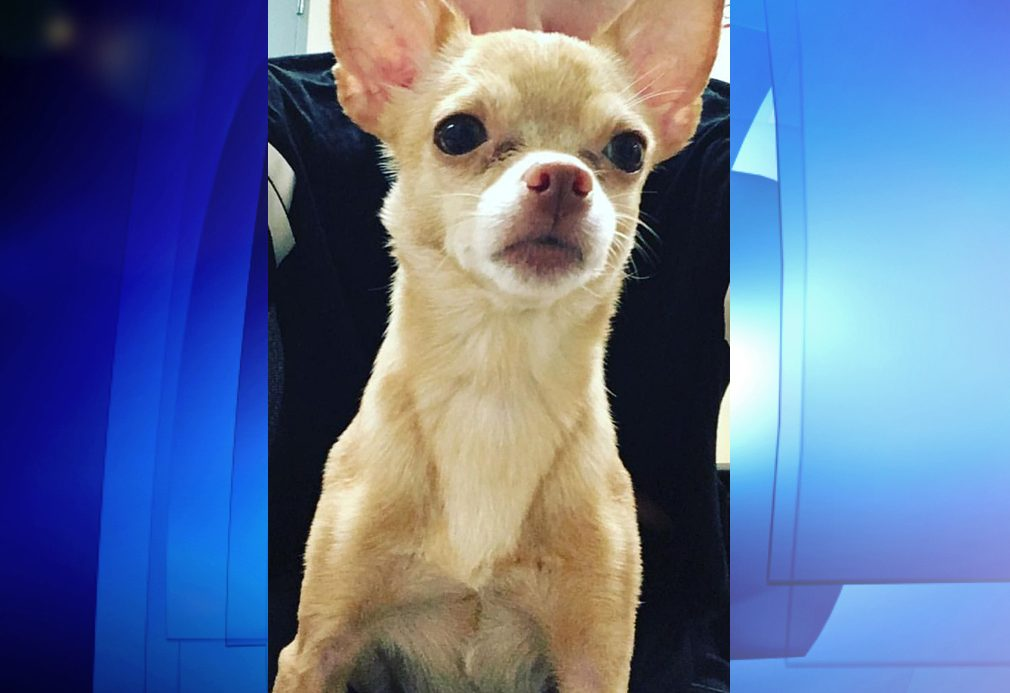 Service dog stolen outside coffee shop warning to owners
