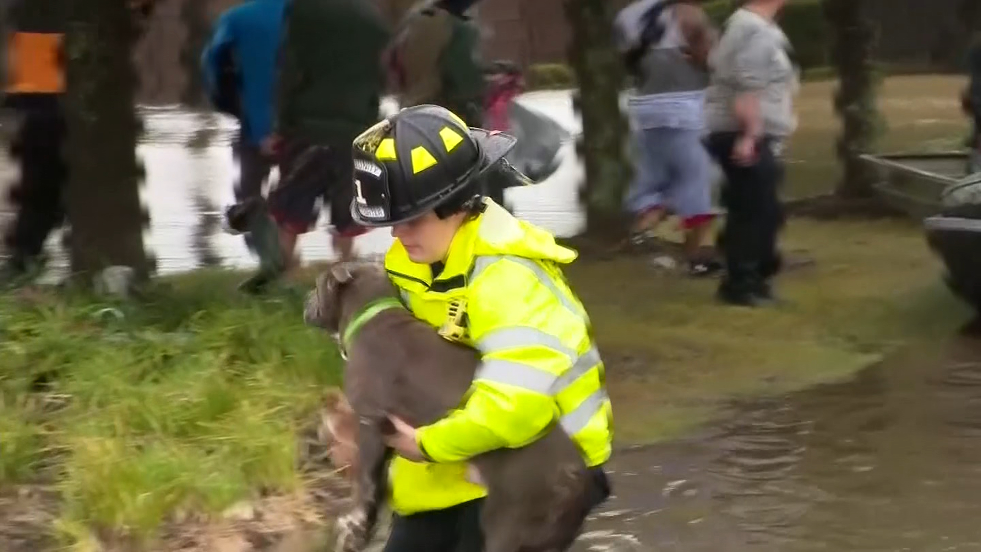 dogs stranded by hurricane harvey arrive in 570 news