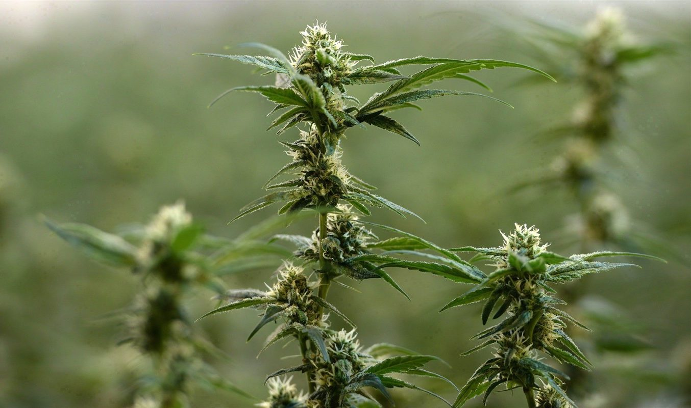 Small Link for Cannabis Use, Reduced Cognitive Functioning